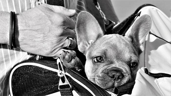 Taška pre psa na vošný čas